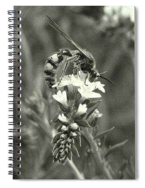 Hunter Wasp On Heliotrope Spiral Notebook