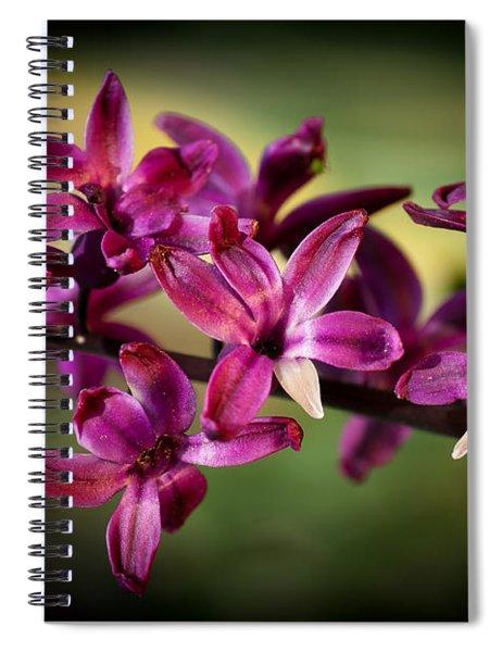 Hyacinth Spiral Notebook