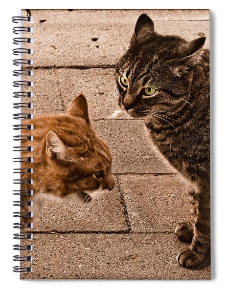 Albuquerque, New Mexico - If Looks Could Kill Spiral Notebook