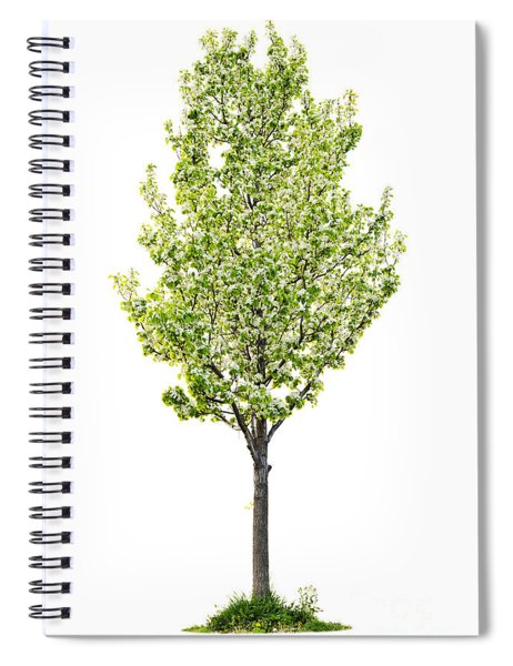 Isolated Flowering Pear Tree Spiral Notebook