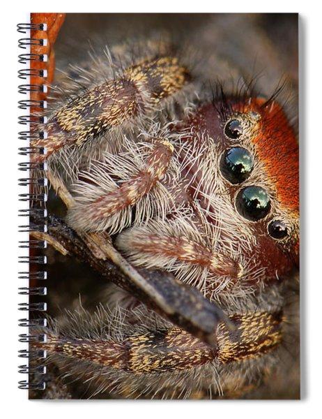 Jumping Spider Portrait Spiral Notebook