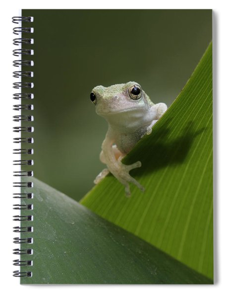 Juvenile Grey Treefrog Spiral Notebook