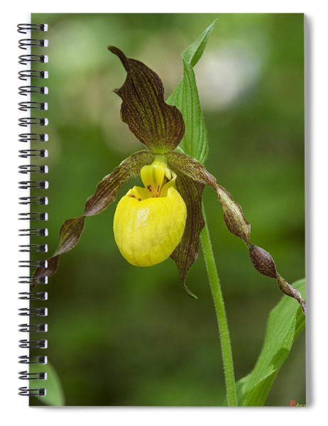Large Yellow Lady Slipper Orchid Dspf0251 Spiral Notebook