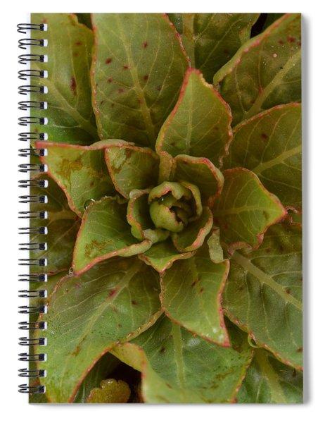 Leaf Star Spiral Notebook