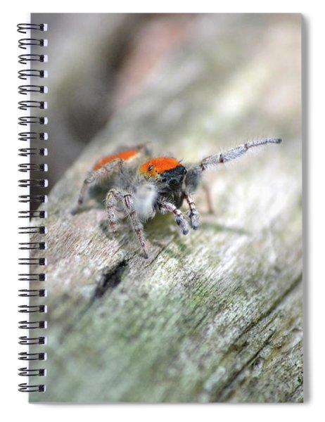 Little Jumper Spiral Notebook