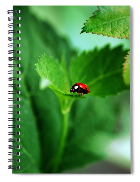 Little Red Lady Spiral Notebook