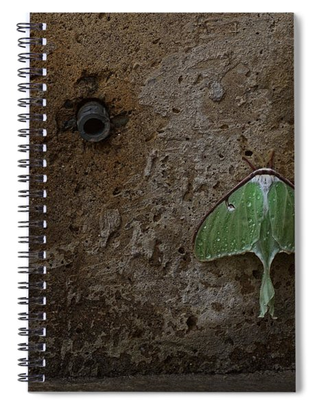 Loitering Spiral Notebook