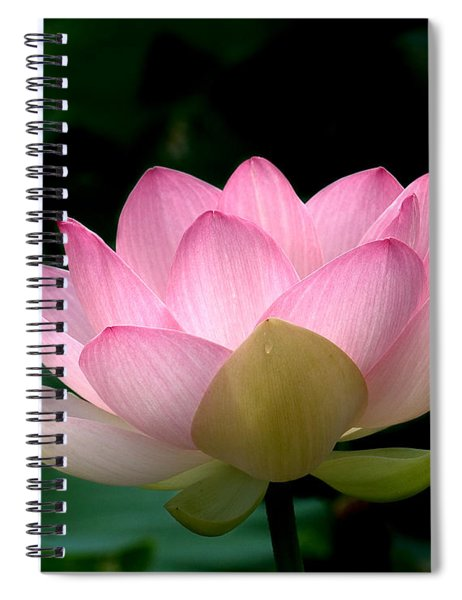 Lotus Beauty--blushing Dl003 Spiral Notebook