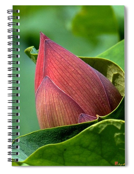 Lotus Bud--bud In A Blanket Dl049 Spiral Notebook