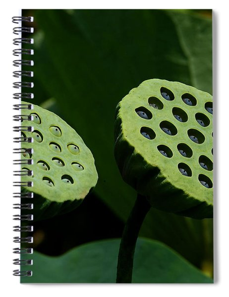 Lotus Capsules-sun Worshipers Dl052 Spiral Notebook