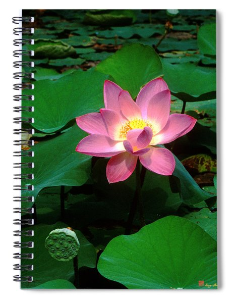 Lotus Flower And Capsule 24a Spiral Notebook
