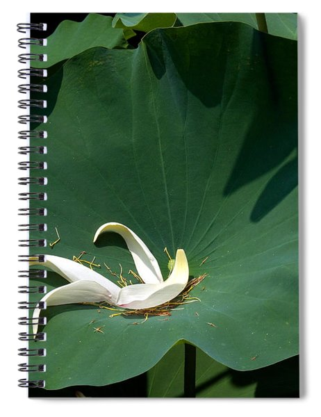 Lotus Leaf--castoff IIi Dl060 Spiral Notebook