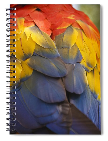 Macaw Parrot Plumes Spiral Notebook