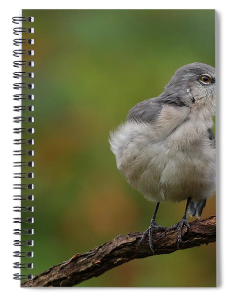 Mocking Bird Perched In The Wind Spiral Notebook