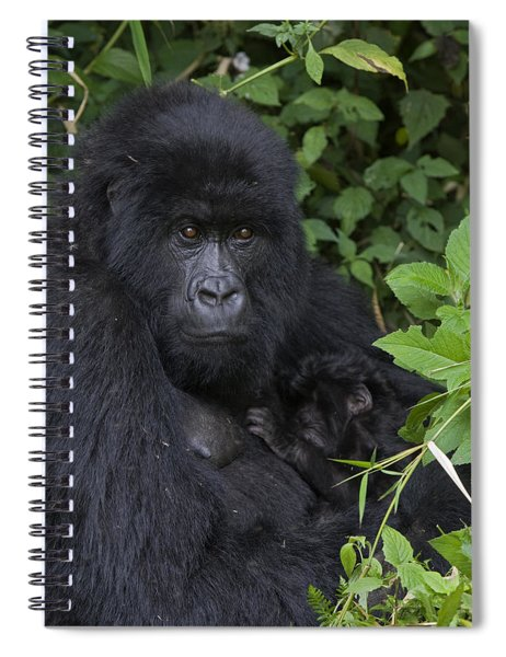 Mountain Gorilla Mother And Infant Parc Spiral Notebook