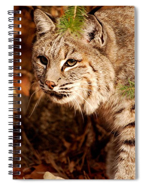 Mr. Whiskers Spiral Notebook