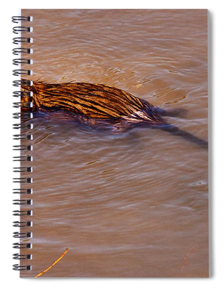 Spiral Notebook featuring the photograph Muskrat Swiming by Edward Peterson