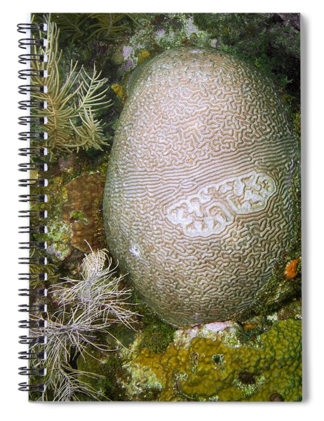 Mysterious Coral Spiral Notebook