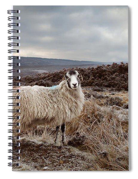 North York Moors Sheep Spiral Notebook