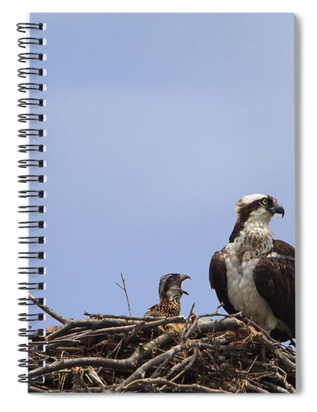 Osprey Mother And Chick Spiral Notebook