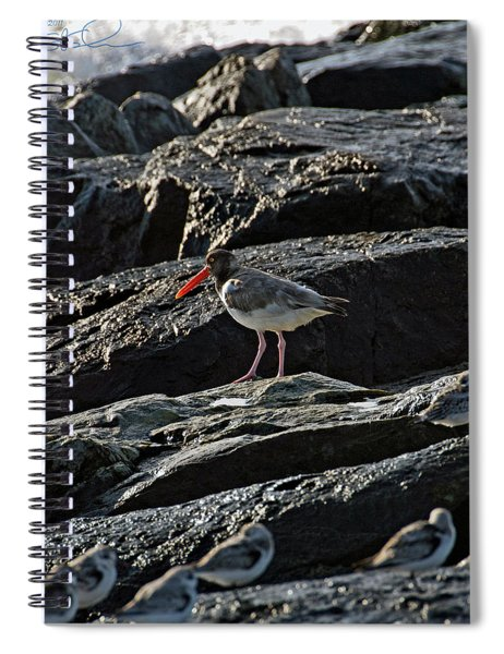 Oyster On The Rocks Spiral Notebook