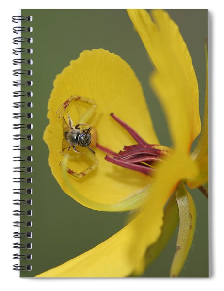 Partridge Pea And Matching Crab Spider With Prey Spiral Notebook