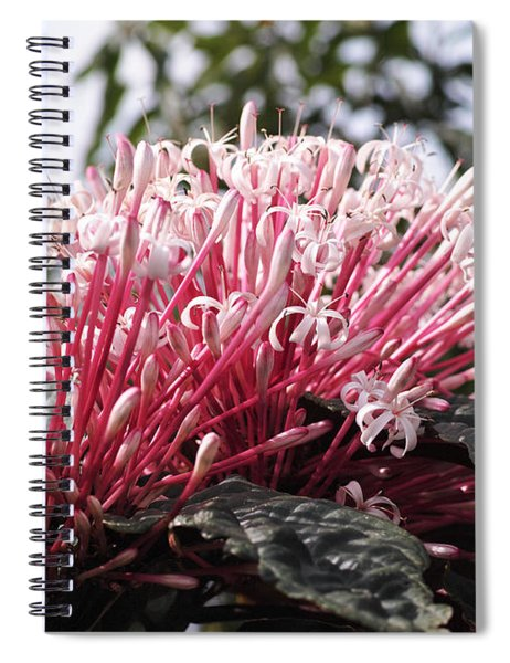 Passion For Pink Spiral Notebook