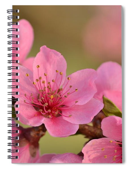 Peach Beautiful Spiral Notebook