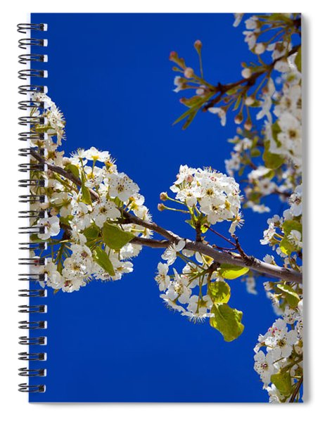 Pear Spring Spiral Notebook