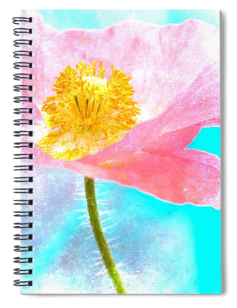 Pink Poppy On Blue Spiral Notebook