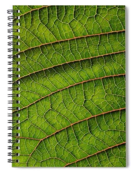 Poinsettia Leaf II Spiral Notebook