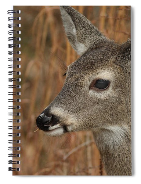 Portrait Of  Browsing Deer Spiral Notebook
