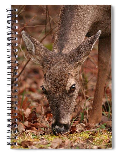 Portrait Of  Browsing Deer Two Spiral Notebook
