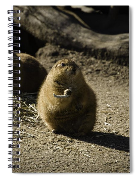 Prairie Dog Sees The Shadow Spiral Notebook