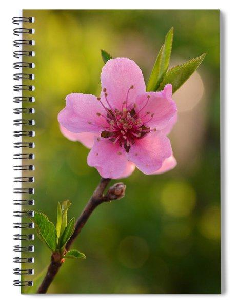 Pretty Pink Peach Spiral Notebook