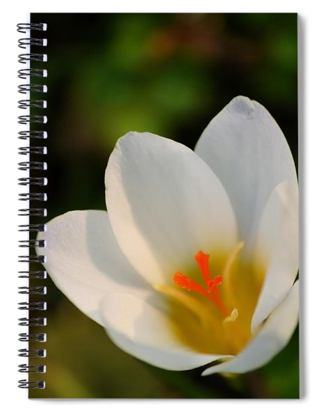 Pretty White Crocus Spiral Notebook