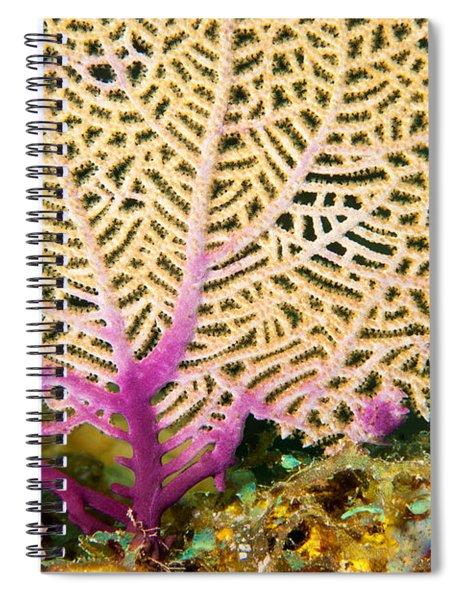 Purple Fan Spiral Notebook