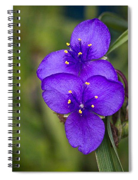 Purple Spiderwort 2 Spiral Notebook