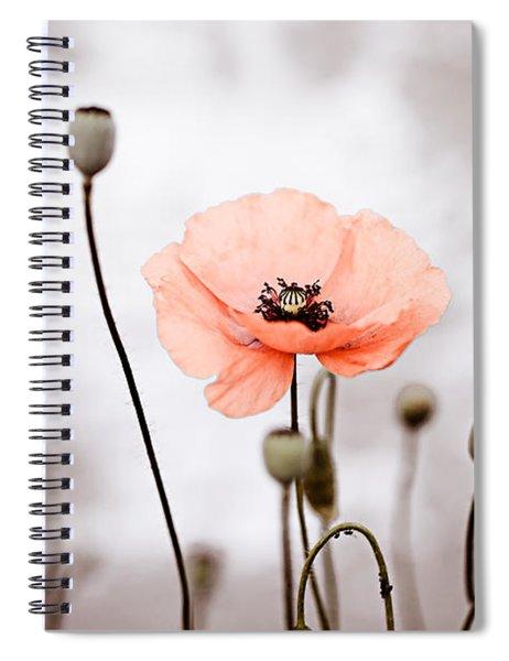 Red Corn Poppy Flowers 01 Spiral Notebook