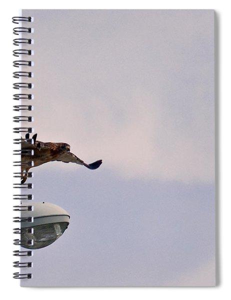 Red-tailed Hawk In Flight Spiral Notebook