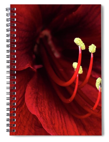 Ref Lily Spiral Notebook