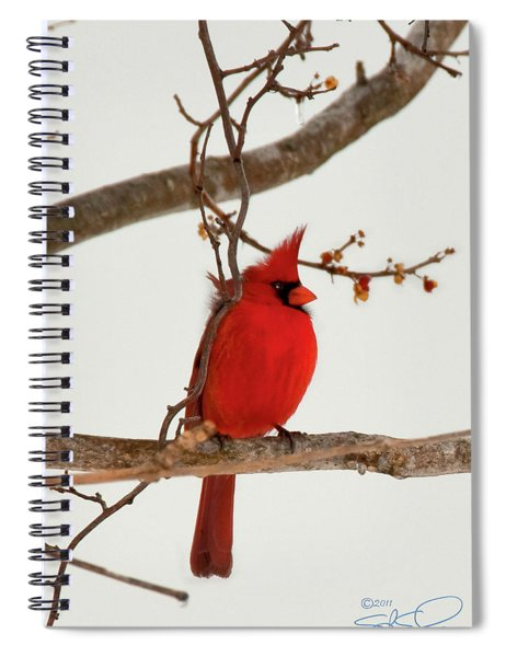 Righteous Cardinal Spiral Notebook