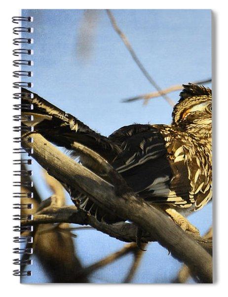 Roadrunner Up A Tree Spiral Notebook