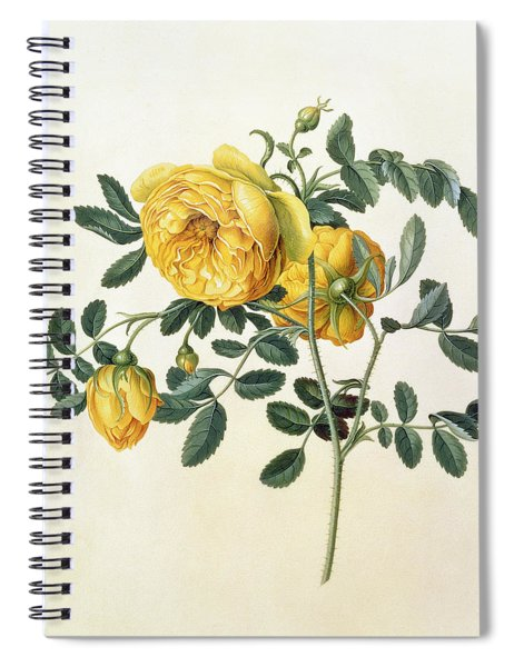 Rosa Hemispherica Spiral Notebook