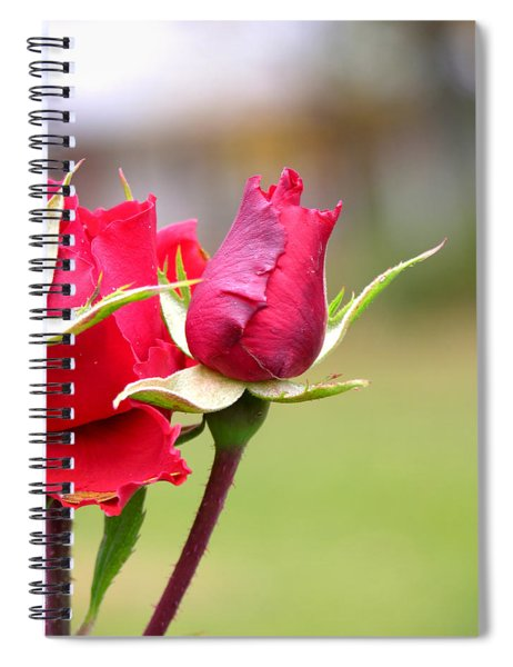 Spiral Notebook featuring the photograph rosa 'Proud Mary' 2964 by Brian Gryphon