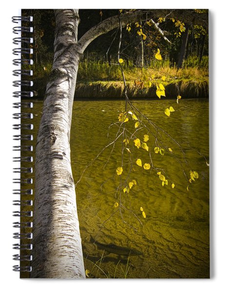 Salmon During The Fall Migration In The Little Manistee River In Michigan No. 0887 Spiral Notebook