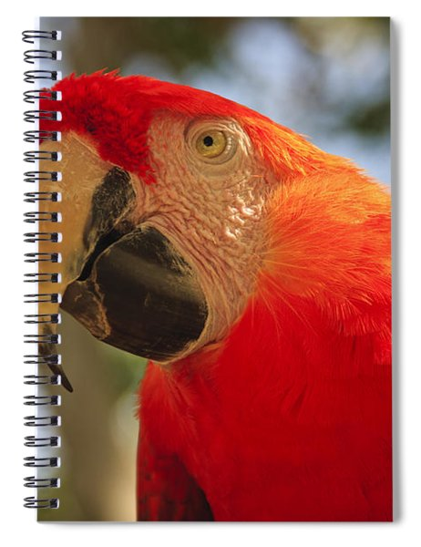 Scarlet Macaw Parrot Spiral Notebook