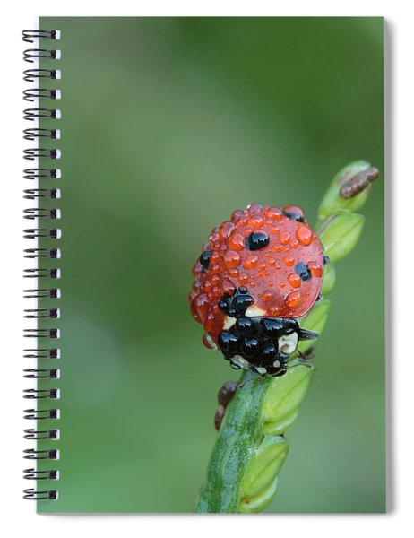 Seven-spotted Lady Beetle On Grass With Dew Spiral Notebook