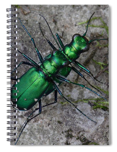 Six-spotted Tiger Beetles Copulating Spiral Notebook