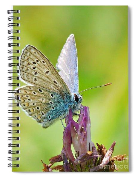 Little Butterfly Spiral Notebook